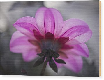 Pink Dahlia Wood Print by Priya Ghose