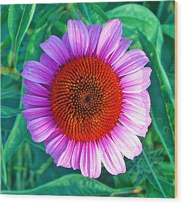 Pink Daisy By Jan Marvin Wood Print