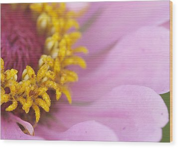 Pink Daisy Wood Print by Phyllis Peterson