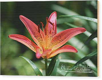 Wood Print featuring the photograph Pink Day Lily 20120614_41a by Tina Hopkins