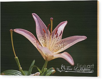 Wood Print featuring the photograph Pink Day Lily 20120615_41a by Tina Hopkins