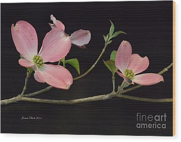 Wood Print featuring the photograph Pink Dogwood Branch  by Jeannie Rhode