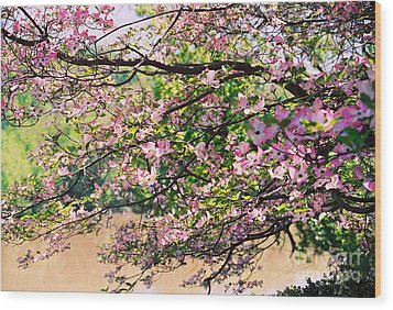 Pink Dogwood I Wood Print by Anita Lewis