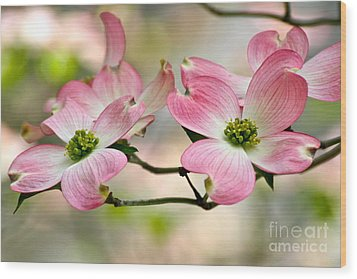 Pink Dogwood Splendor Wood Print by Eve Spring
