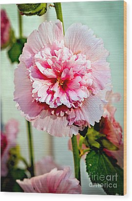 Pink Double Hollyhock Wood Print by Robert Bales