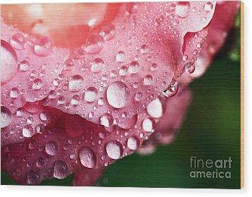 Pink Drops Wood Print by John Rizzuto