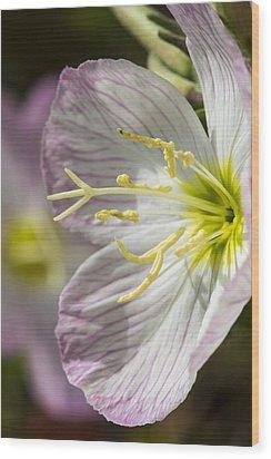 Pink Evening Primrose Flower Wood Print