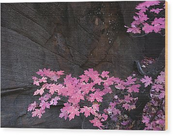 Pink Fall Colors In Sedona Arizona Wood Print by Dave Dilli