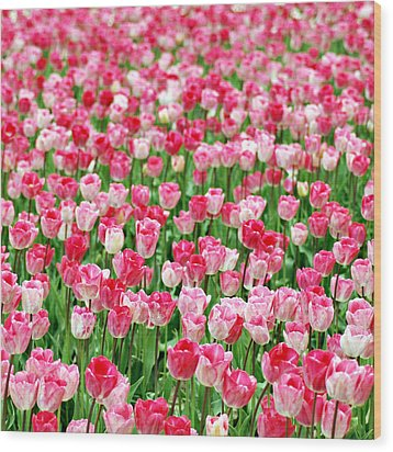 Wood Print featuring the photograph Pink Field by Kjirsten Collier