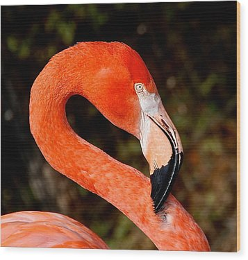 Wood Print featuring the photograph Not So Pink Flamingo by Dee Dee  Whittle