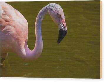 Pink Flamingo Wood Print by Garry Gay