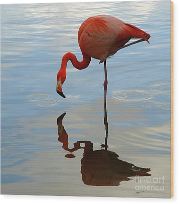 Pink Flamingo   Wood Print by Raymond Earley