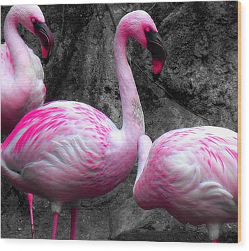 Wood Print featuring the photograph Pink Flamingos by J Anthony