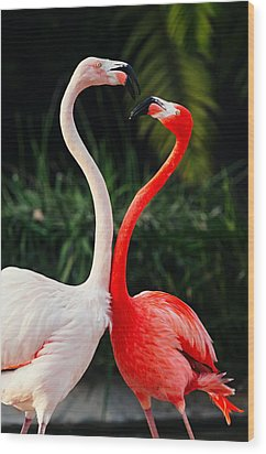 Pink Flamingos - Who's The Boss? Wood Print by Photography  By Sai