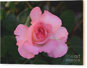 Pink Floribunda Rose Wood Print