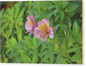 Wood Print featuring the photograph Pink Flower by Alex King