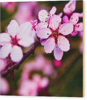 Wood Print featuring the photograph Pink Flower by Chris McKenna