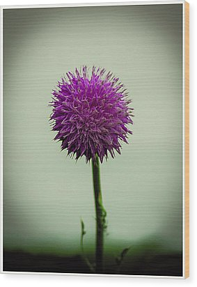 Pink Flower Wood Print by CSH Photography