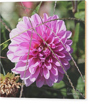 Pink Flower Wood Print by Cynthia Snyder