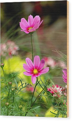 Pink Flower Wood Print by Ed Roberts
