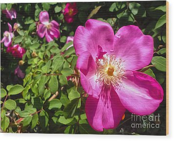 Pink Flower Wood Print by Gregory Dyer
