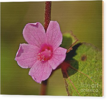 Wood Print featuring the photograph Pink Flower by Olga Hamilton