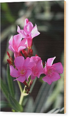 Wood Print featuring the photograph Pink Flower  by Ramabhadran Thirupattur