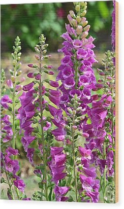 Pink Foxglove Flowers Wood Print by P S