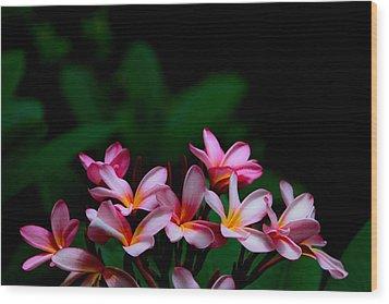Pink Frangipani Wood Print by Donald Chen