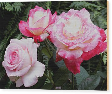 Wood Print featuring the photograph Pink Garden Roses by James C Thomas