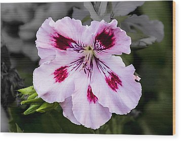 Wood Print featuring the digital art Pink Geranium by Photographic Art by Russel Ray Photos