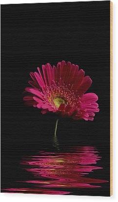 Pink Gerbera Flood 1 Wood Print