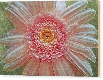 Pink Gerbera Textured Wood Print