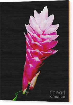 Pink Ginger Lilly Wood Print by Amar Sheow