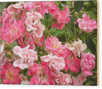 Wood Print featuring the photograph Pink Groundcover Roses by Margaret Newcomb