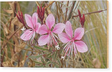 Wood Print featuring the photograph Pink Guara by Bonnie Muir