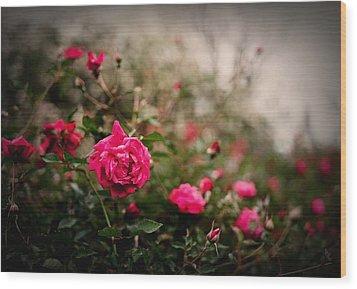 Pink Heaven Wood Print by Linda Unger