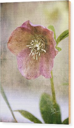 Wood Print featuring the photograph Pink Hellebore by Betty Denise