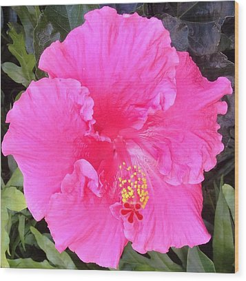 Wood Print featuring the photograph Pink Hibiscus by Alohi Fujimoto