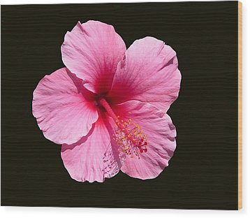 Pink Hibiscus Blossom Wood Print