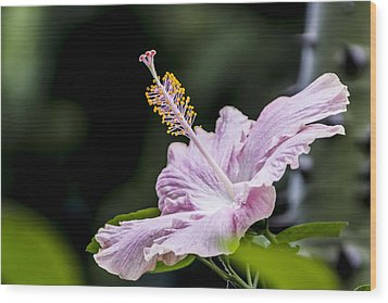 Wood Print featuring the digital art Pink Hibiscus Flower by Photographic Art by Russel Ray Photos