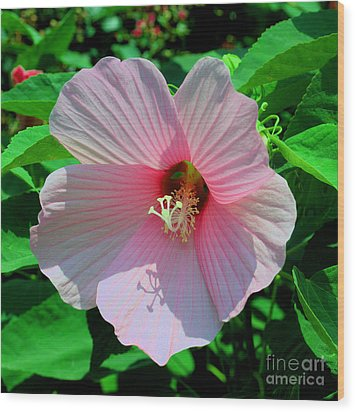 Pink Hibiscus Wood Print by Luther Fine Art