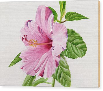 Pink Hibiscus With White Background Wood Print by Sharon Freeman