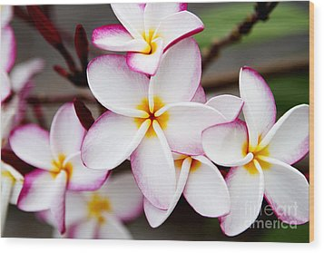 Pink Highlighted Plumeria Wood Print by Thanh Tran