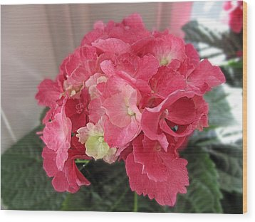 Pink Hydrangea Wood Print by Barbara McDevitt