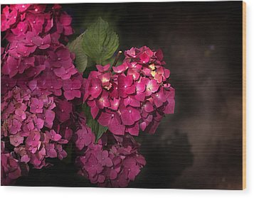 Pink Hydrangea Flowers In A Garden Wood Print
