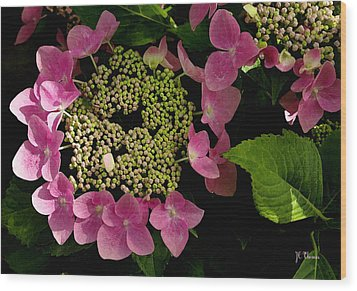 Wood Print featuring the photograph Pink Hydrangea by James C Thomas