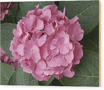 Wood Print featuring the photograph Pink Hydrangea by Sandy Molinaro
