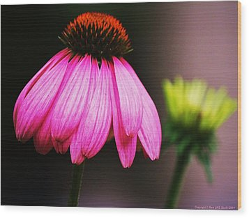 Wood Print featuring the photograph Pink Is A Colour... by Al Fritz