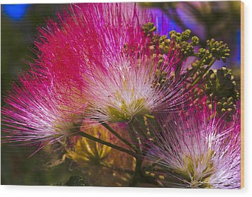 Wood Print featuring the photograph Pink  by Ivete Basso Photography
